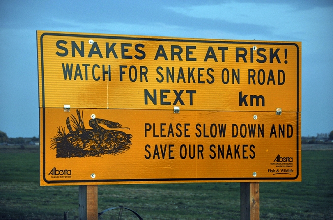 watch-for-snakes