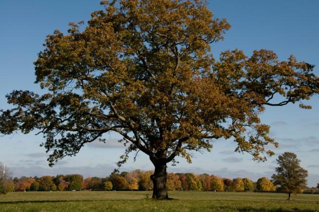 lone_tree_niagra