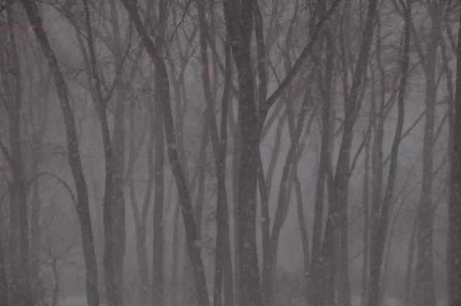blizzard-toronto_3