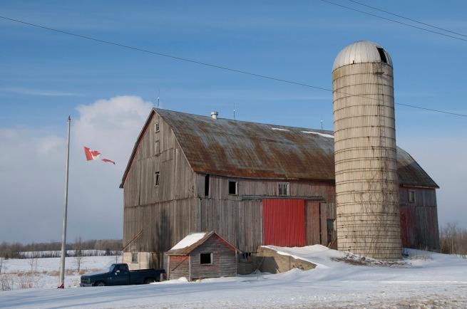 farm-yard-near-napanee