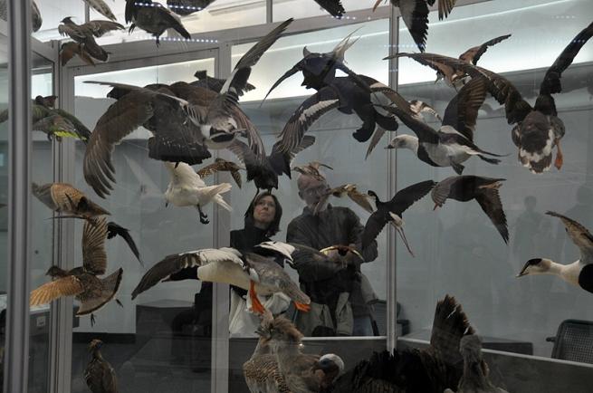 ornithology-under-glass