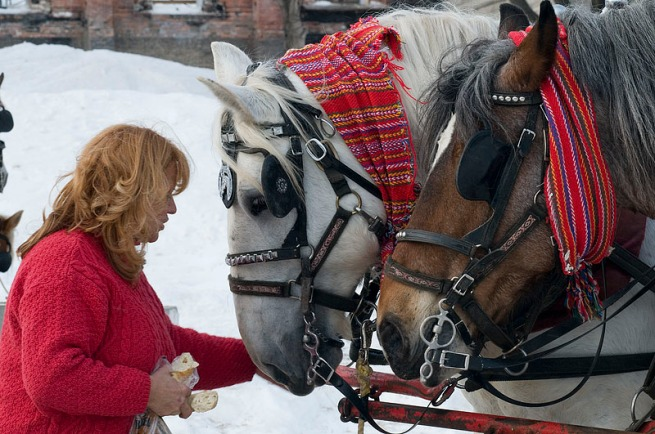 horses-with-scarfs