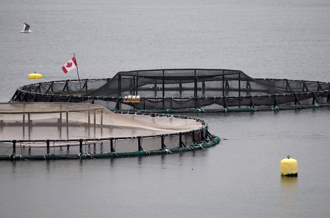 fish-farm-canadian-flag-2