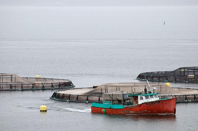 fishing-boat-with-fish-farm