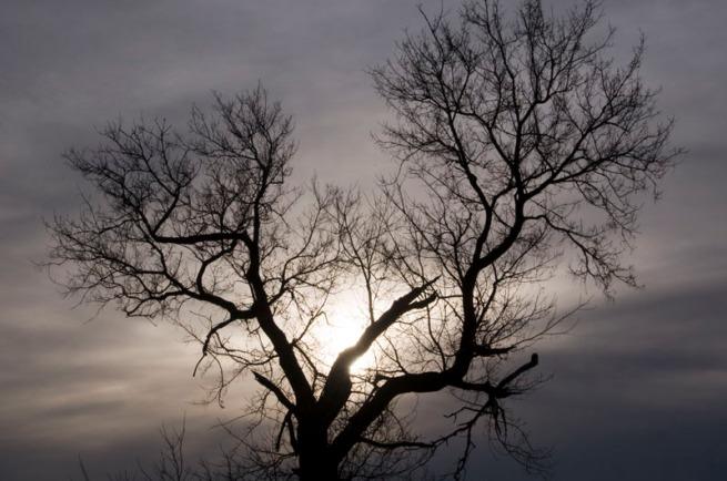 spooky-tree