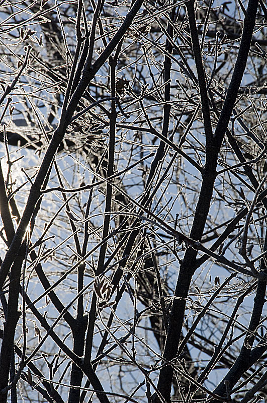 branch-frost-detail
