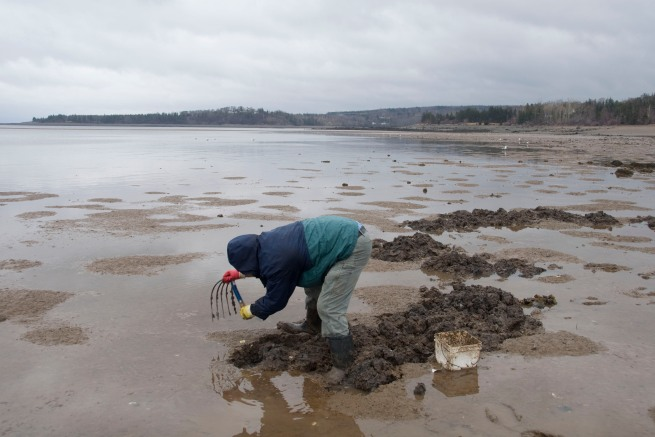 digby-earth-day-digging-clams5