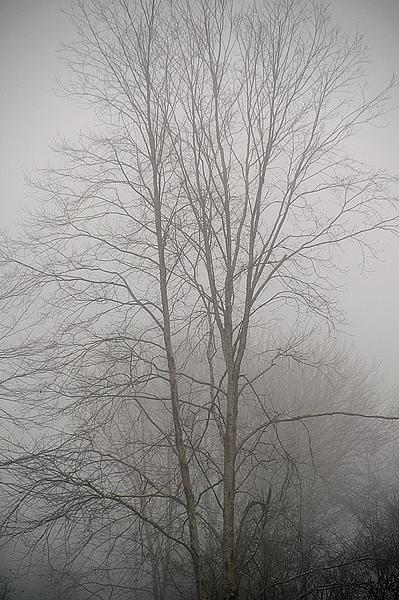 grave-island-lone-tree