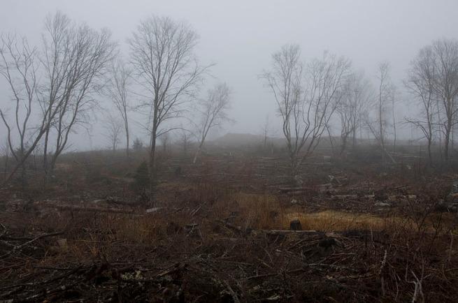grave-island-trees-3