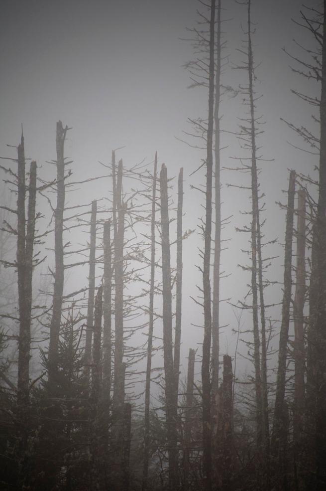 grave-island-trees-5