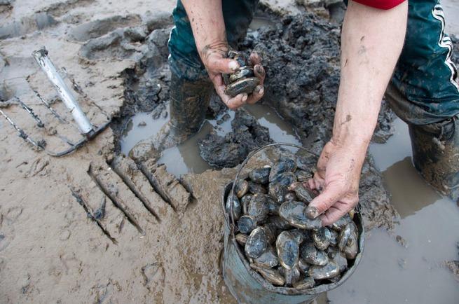 mark-jordan-digging-clams-at-smiths-cove
