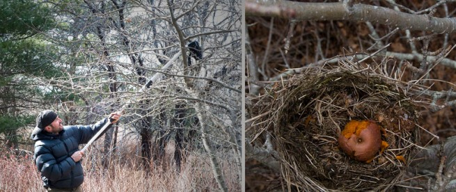 on-assignment-shooting-birds-nest