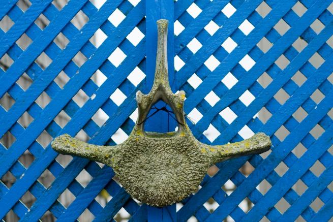 whale-bone36
