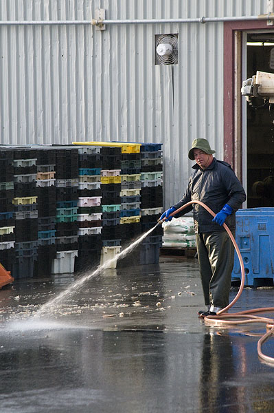 hosing down crab crates