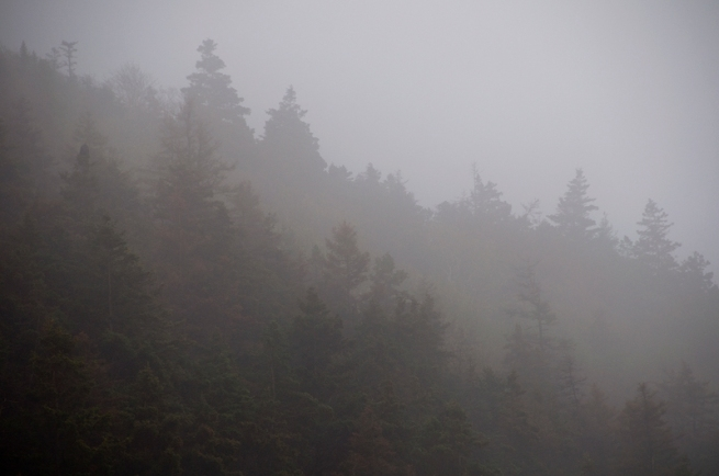 trees in morning fog on the cabot trail