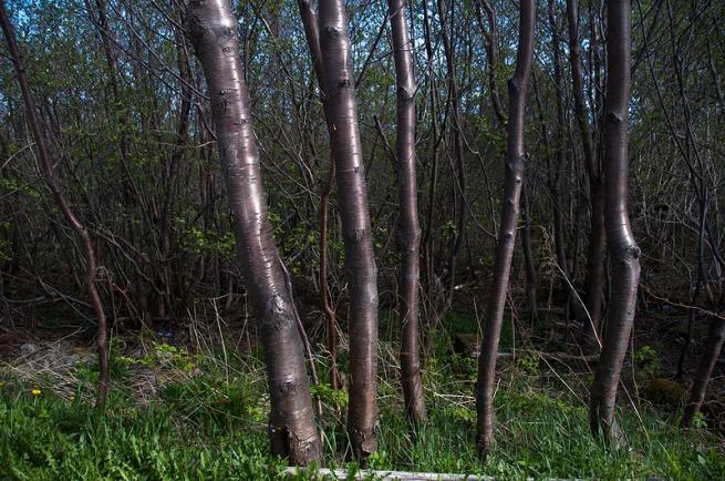 very shiney trees
