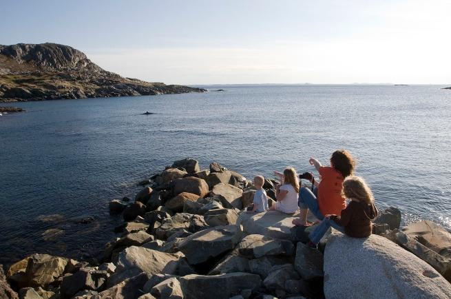 whale in fogo island