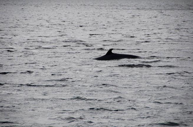 minky whale in gros morne