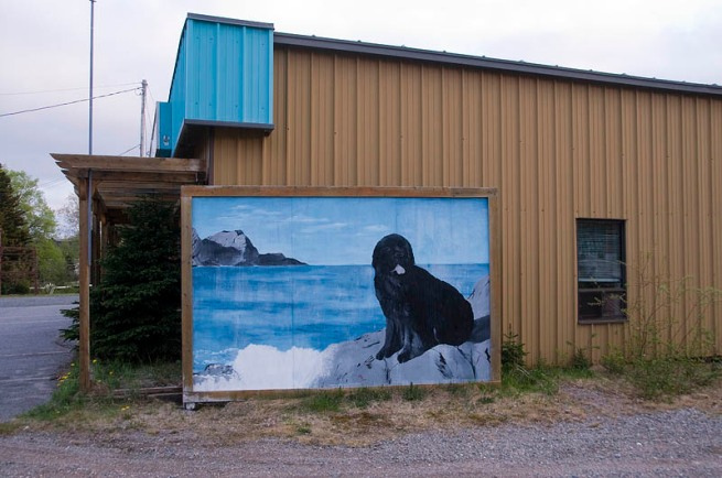 newfoundland dog painting on building