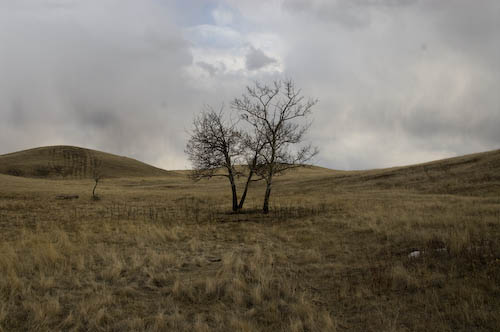 lone tree in the dry badlands grass